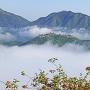 雲海に浮かび上がる竹田城(初夏)[提供:吉田利栄]