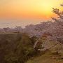 日の出の竹田城と桜[提供:吉田利栄]
