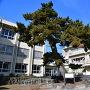 長島の大松