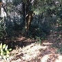 鷲神社東側の土塁と堀跡