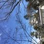 公園から天守を眺める。
