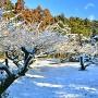 大井田城跡梅林公園 雪景色