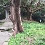 石碑と伊祖神社