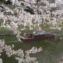 堀をゆく花見舟