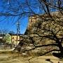 隅櫓跡石垣