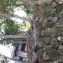本丸北側虎口の石垣