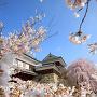 上田城跡公園の千本桜[提供:上田市商工観光部観光課]