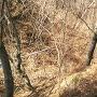 米山城跡の堀切