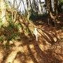 畝状竪堀群(36本目)の分岐点を34、35番目の畝上から見る