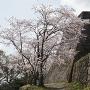 四重櫓と桜