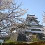 桜と岸和田城(2014年)[提供:岸和田市]