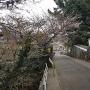 武家屋敷と桜