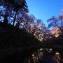 高遠城址公園の夜桜[提供:伊那市観光協会]