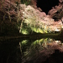 水面に映る夜桜(鏡面桜)[提供:伊那市観光協会]