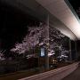 信州高遠美術館と桜[提供:伊那市観光協会]
