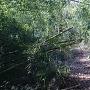 竹藪の中の登城路。