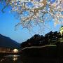 島原城と夜桜[提供:島原市]