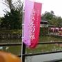 桜祭り小雨
