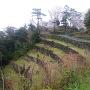 鳥羽城本丸と三の丸前の石垣
