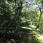 鎮守の森散策路