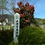 武田信義館跡