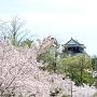 桜と岡崎城[提供:三河武士のやかた家康館]