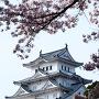 天守閣と桜(姫路動物園内から)