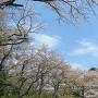 平山城趾の桜と空