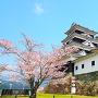 桜と大洲城