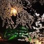 天守と夜桜