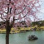 春の楽山園