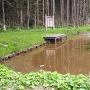愛宕谷公園にある蓮池