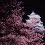 夜桜と天守閣の横顔