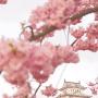 春色天守閣