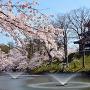 満開の桜と三重櫓