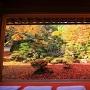 清瀧寺徳源院庭園の荘厳な紅葉