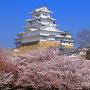 朝の桜雲と