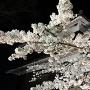 夜桜と南櫓