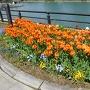 沿道に咲くチューリップと堀