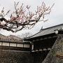 桜と大手門