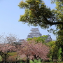 八重桜咲く