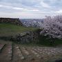 米子城名残の夕桜