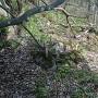 本郭の虎口前に散乱する石