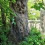 正覚寺城跡碑