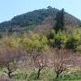 清長寺と青柳城遠景