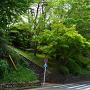 関戸城跡 (聖蹟桜ヶ丘 いろは坂)
