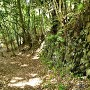 登城道の野趣あふれる石垣