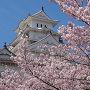 桜と城と青空と
