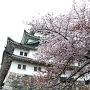 桜ごしの天守