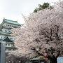 天守、桜、石垣
